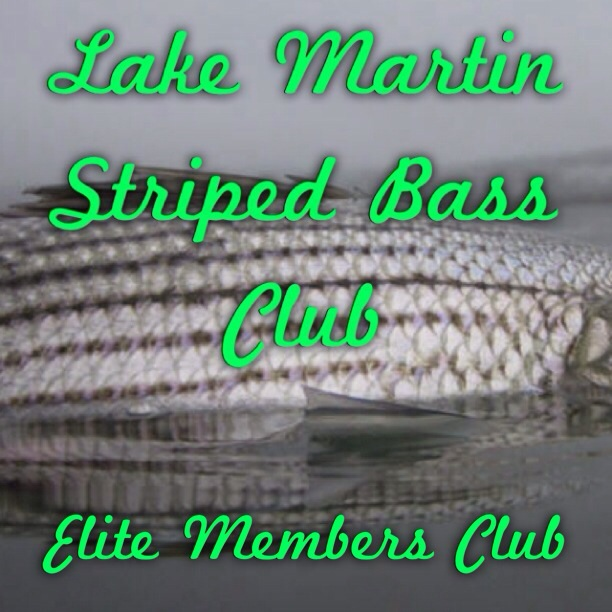 Lake Martin Striped Bass Club